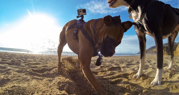 GoPro ドッグハーネスで、愛犬目線の世界を撮影!