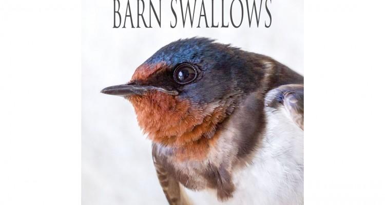 野鳥写真家である宮本桂さんの作品。ツバメの写真集「BARN SWALLOWS」!