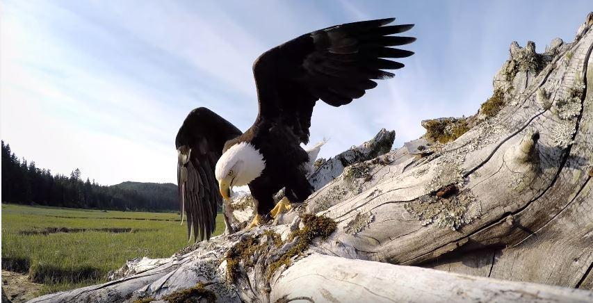 gopro eagle 01