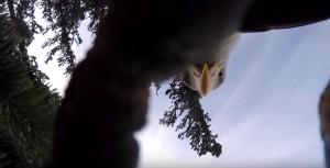 gopro eagle 03